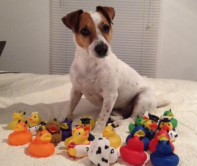 I'm missing a duckie...