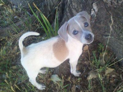 When he was a small puppy