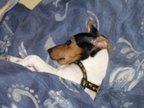 Duvet Dog