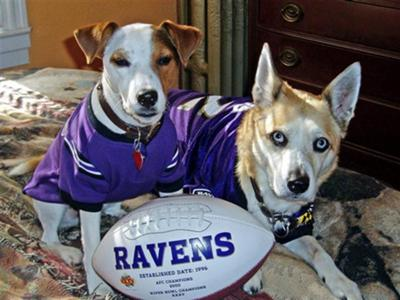 Go Ravens!