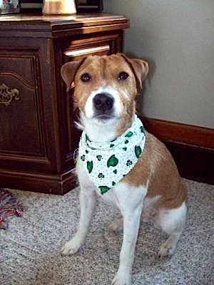 Gappie's all decked out for St. Patty's Day