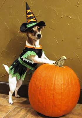 Cricket's Going Trick Or Treating