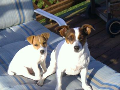 Bandit (On left) Sugar (On right)