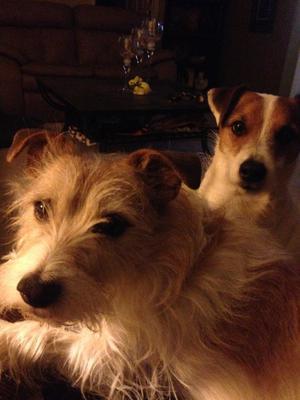 Jack and Spike