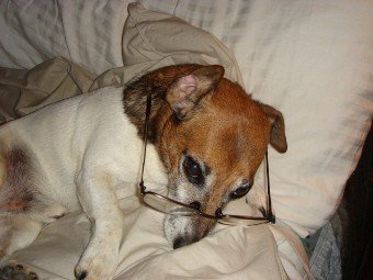 jack russell terrier health problems