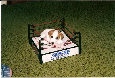Cooper, 7 wks, loves to wrestle!!!!!