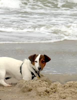 Lola Building a Sand Castle