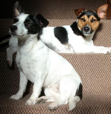 Minnie and Milo