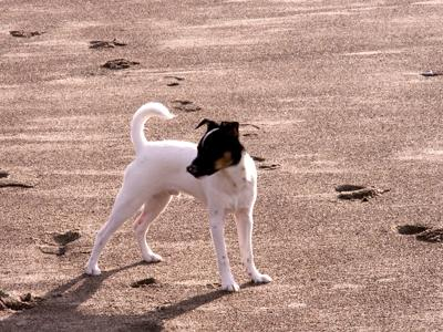 My Dog Pepper