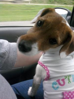Daisy on the way to her aunt's house!