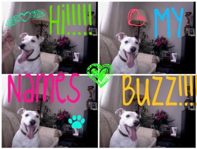 happy buzz