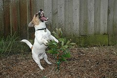 jrt training