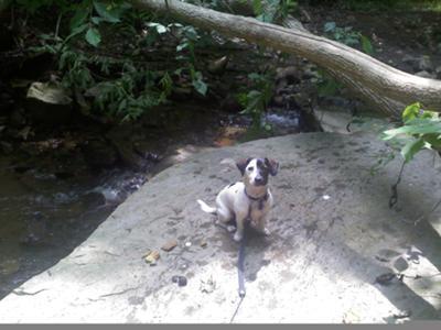 he loves to fetch in water