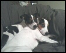 Shilo & Lucy