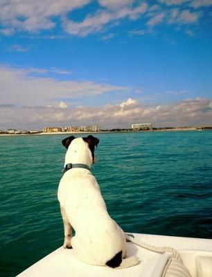 Stewie,  high seas adventurer