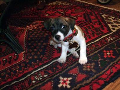 Cutest puppy...