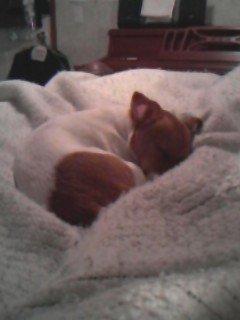 Sleeping Ginger