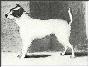 Old Parson John's Dog Trump