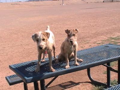 Mud Puppies