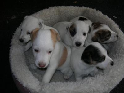 Wolfie, Sweeney, and Siblings