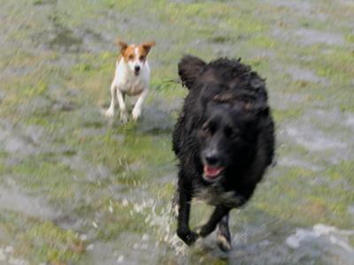 Zoey & Emma on Tidal Flats, Cobble Hill, BC